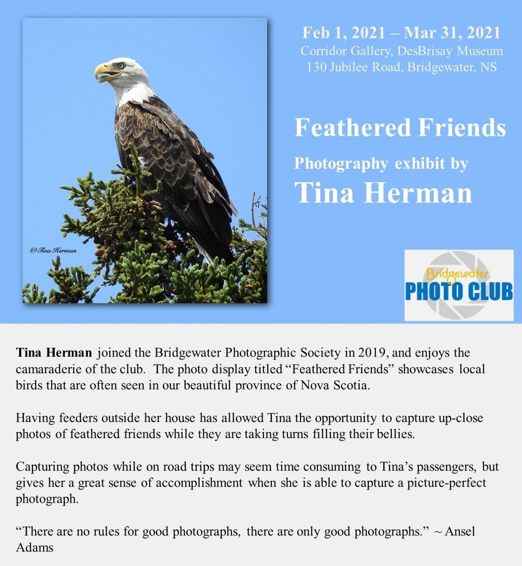 Tina Herman - Feathered Friends - Exhibit Poster_600s